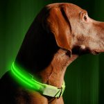 5 Best Rechargeable LED Dog Collars – Price and Features